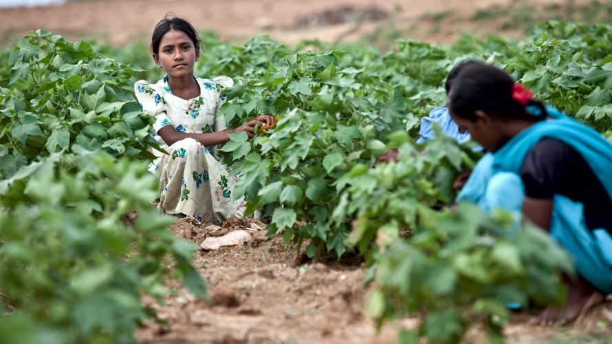 Five years to end child labour: education could be the solution