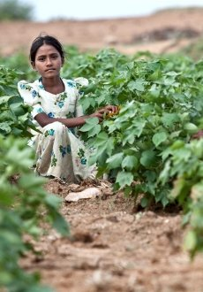 Reshmi Prabhu (12) in a cotton field in Karnatarka, India. She previously worked in the fields before being enrolled in school for the first time this year.