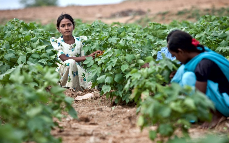 Child labour and education in India and Bangladesh